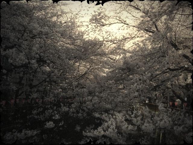☆夜桜舞い散る ATOM YOGAで★